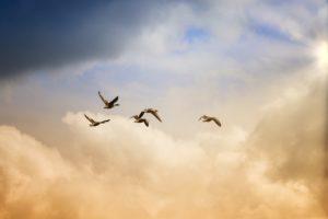 birds, flying, freedom
