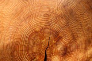 wood, tree, spruce